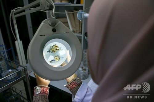 パーム油生産大国マレーシア、アブラヤシの小型品種に希望託す