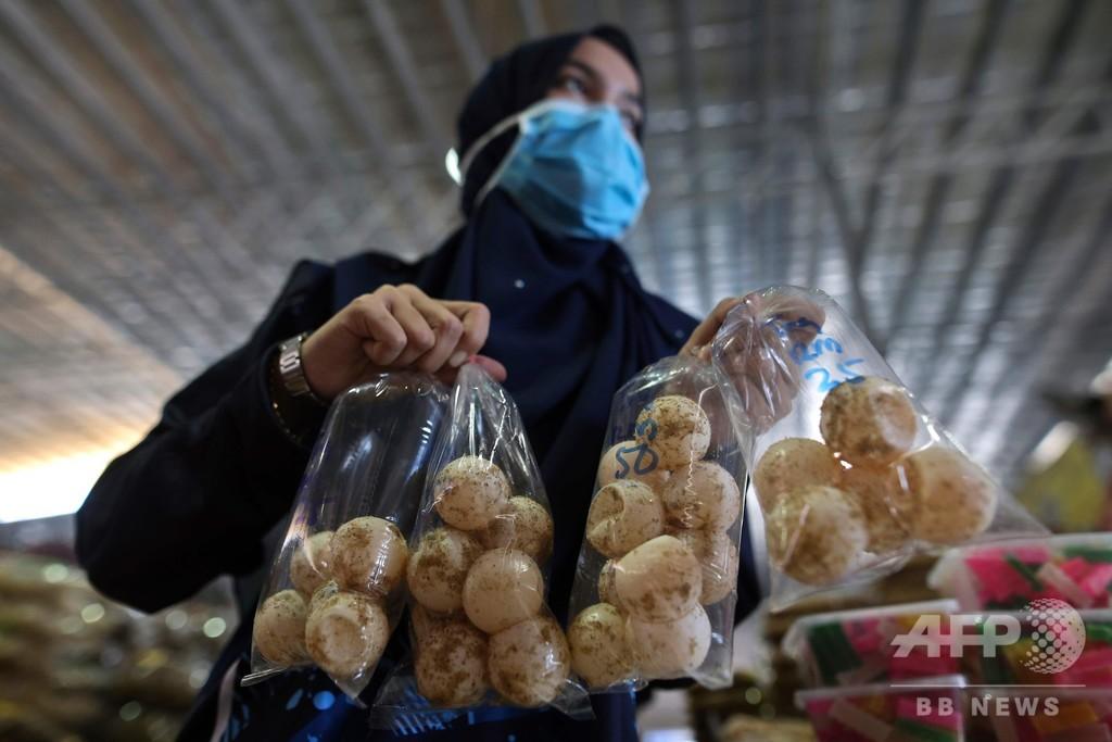 マレーシアのウミガメ産卵地、繁殖目指し卵の取引全面禁止へ