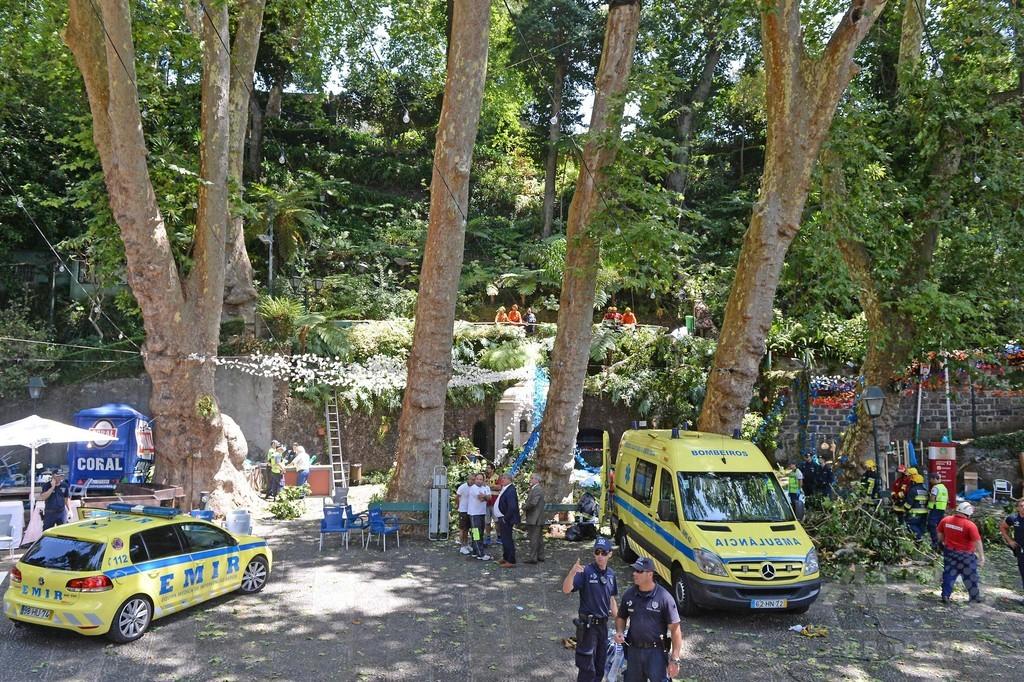 巨木が倒れ13人死亡 ポルトガル、宗教行事の人混み直撃
