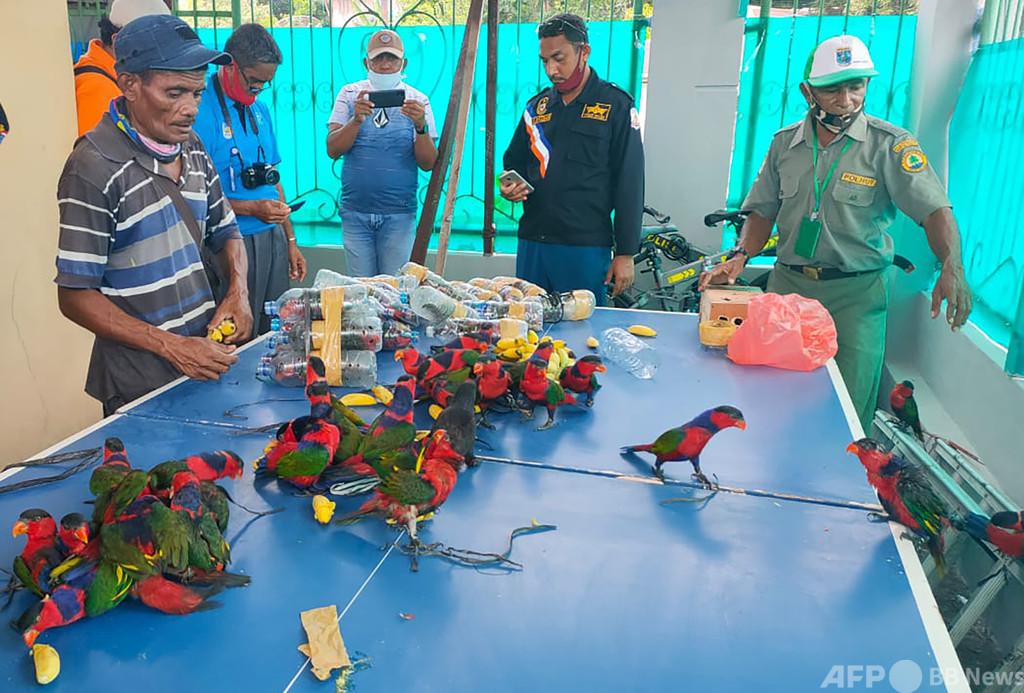 密輸インコ多数押収、ペットボトルに1羽ずつ インドネシア