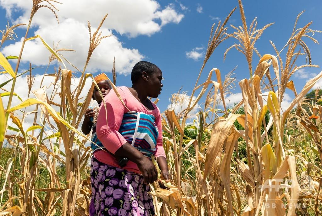 ジンバブエ国民の60%が食料不足 「人的要因の飢餓」迫る