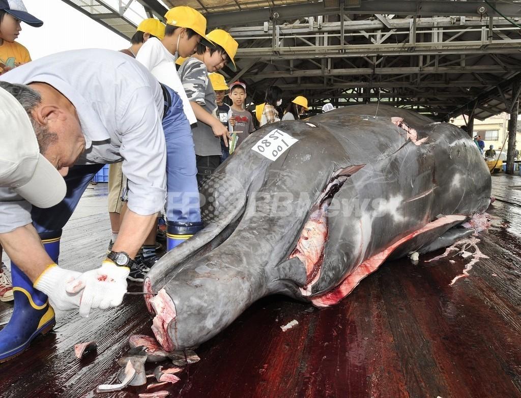日本の研究結果「クジラの皮下脂肪は減少」の余波
