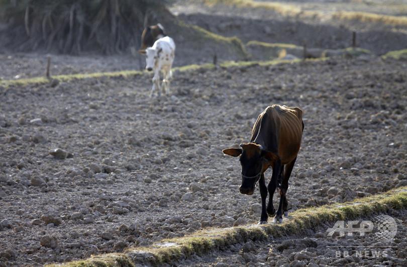 干ばつに見舞われたイラク、耕地面積が半減