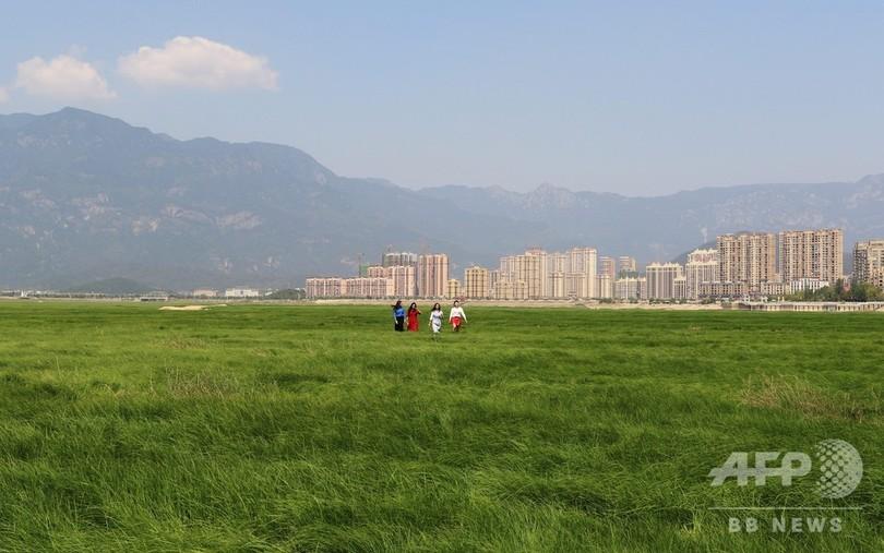 中国最大の淡水湖が渇水期に入り「大草原」に 湖底遺跡も姿現す