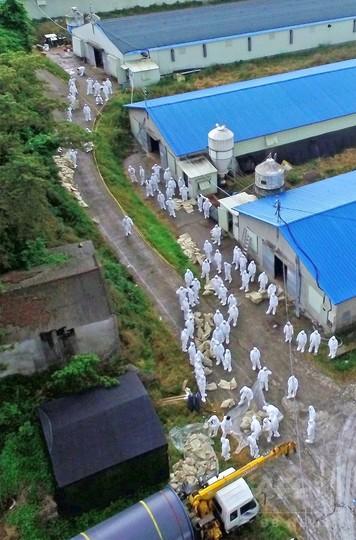 韓国でまた鳥インフルが流行、家禽の移動を全面禁止