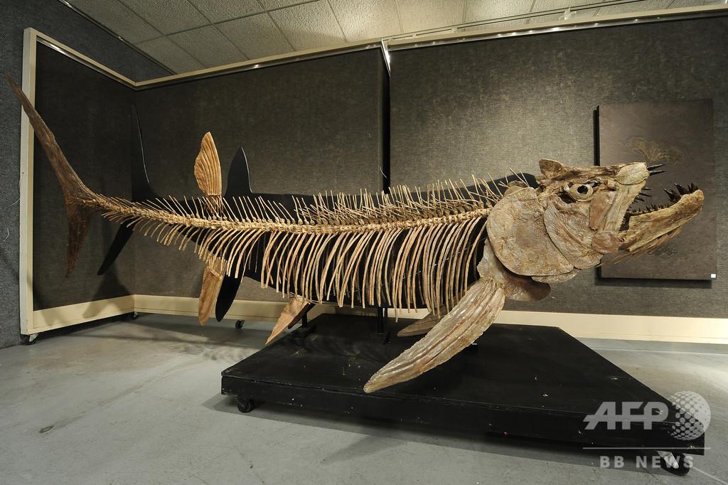 7000万年前の巨大魚化石、アルゼンチンで発見 全長6メートル超