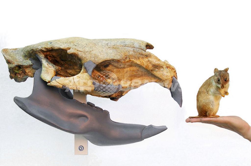 体重1トンは間違い?史上最大のげっ歯類の体重を巡り論争