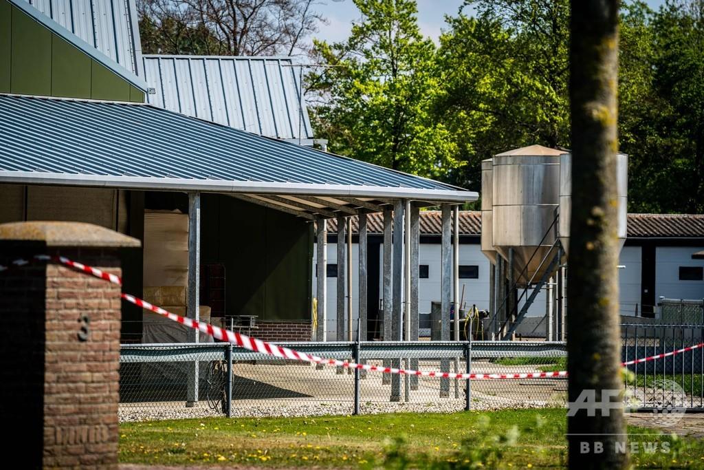 ミンクが新型コロナに感染、オランダで農場2か所を封鎖