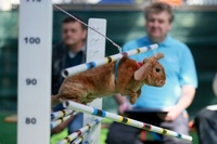 頑張る姿が愛くるしい、ウサギの陸上競技大会 チェコ