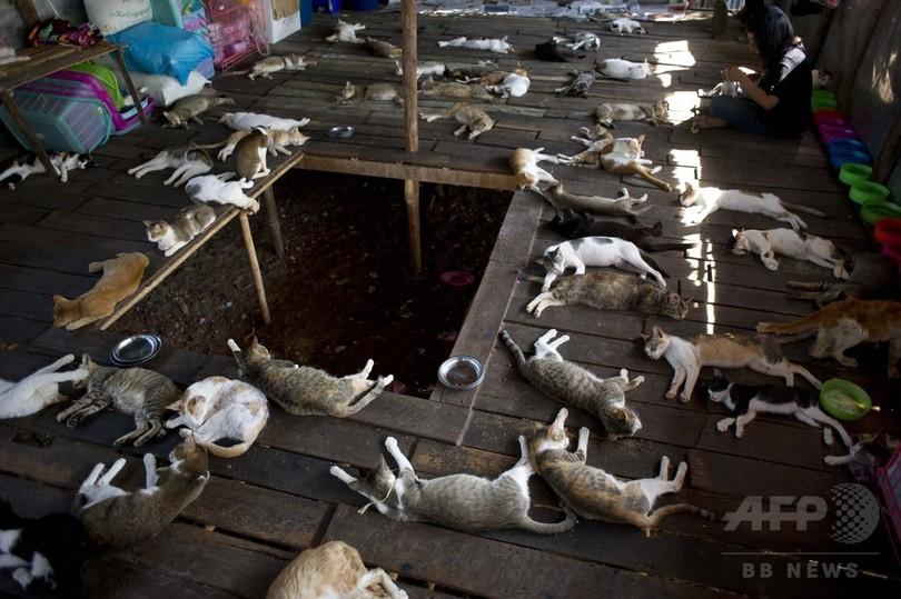 ネコやイヌなど動物200匹の保護施設、ミャンマー