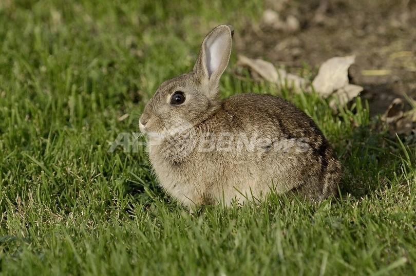 お手柄ペット、今度はウサギが飼い主を火事から救う