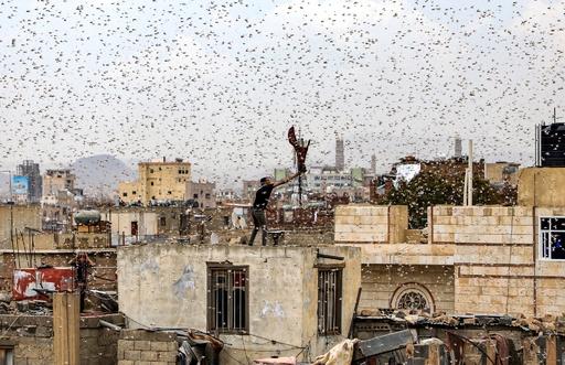 空を埋め尽くすバッタの大群 イエメン首都