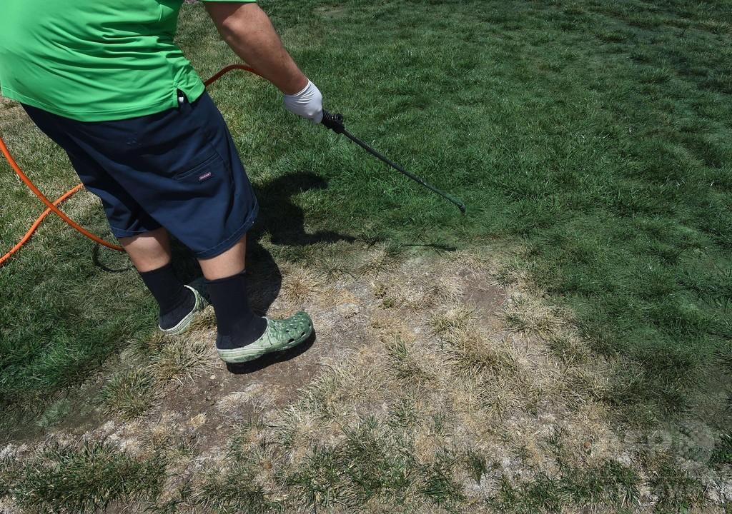 枯れた芝生を緑色に塗る人続出、大干ばつの米カリフォルニア州