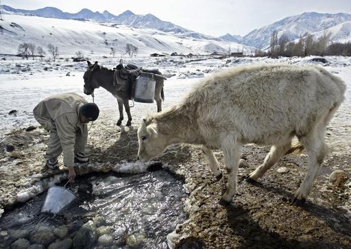 キルギスのロバ飼い