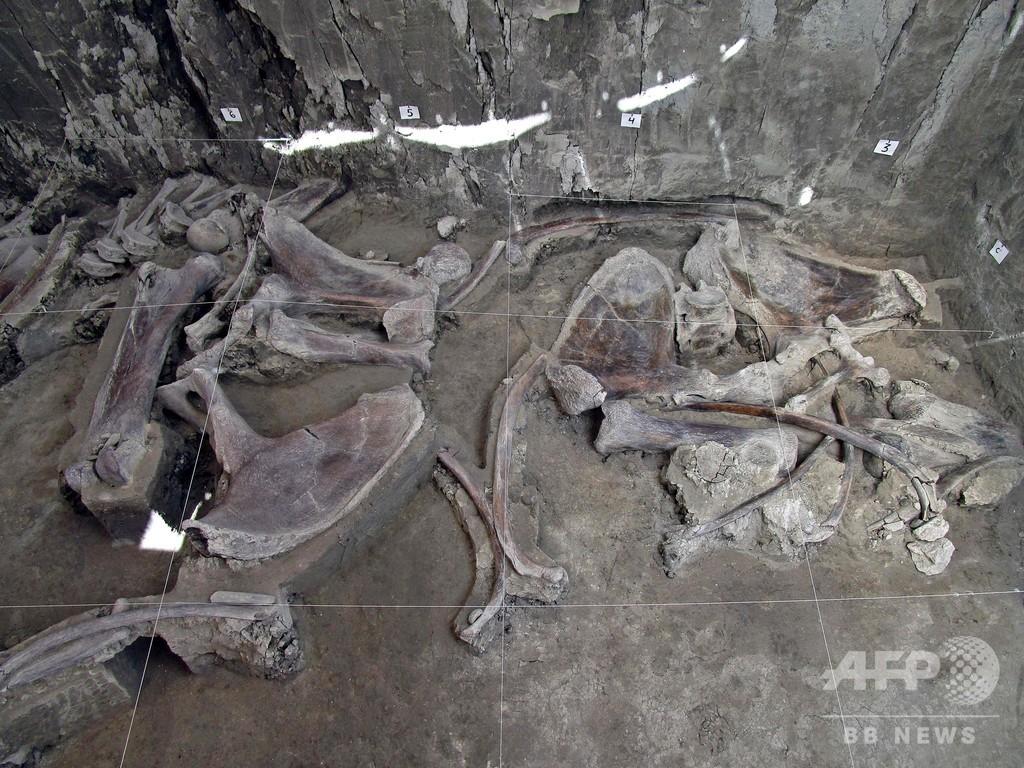 史上最多、マンモスの骨800個発見 捕獲用わなも? メキシコ