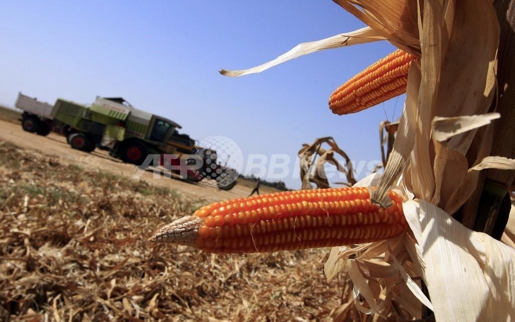 EUがGM作物の承認を凍結、2014年末まで