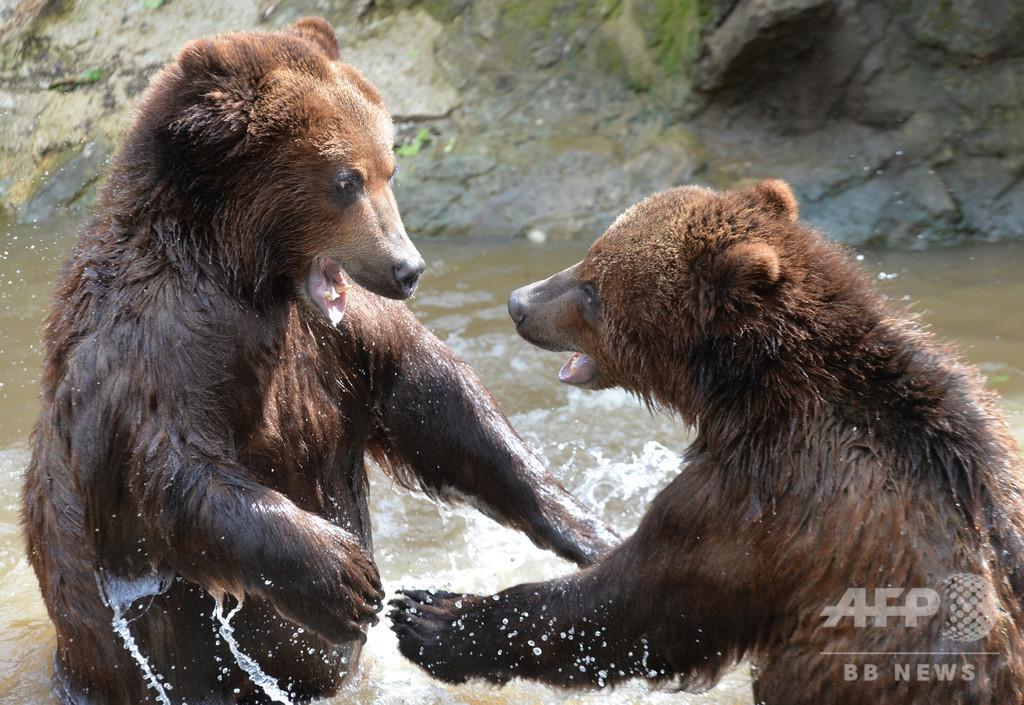 「人間対クマ」勝つのはどっち?! 米テレビ局が新番組発表