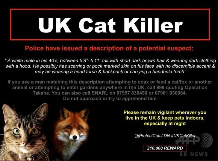 ロンドンの「猫切り裂き魔」 2年で400匹が犠牲に いまだ逮捕できず