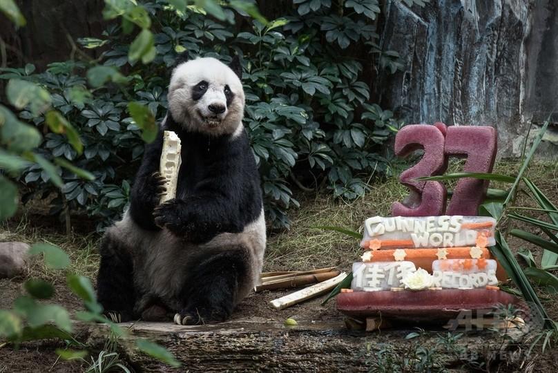 香港のパンダ、史上最高齢の37歳に