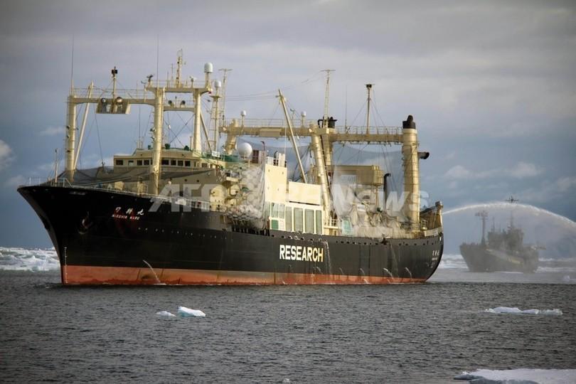 日本の調査捕鯨、今季の早期切り上げを検討