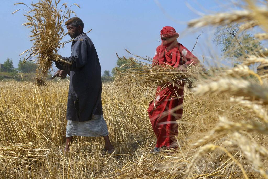 CO2濃度上昇で穀物の栄養成分が減少、研究