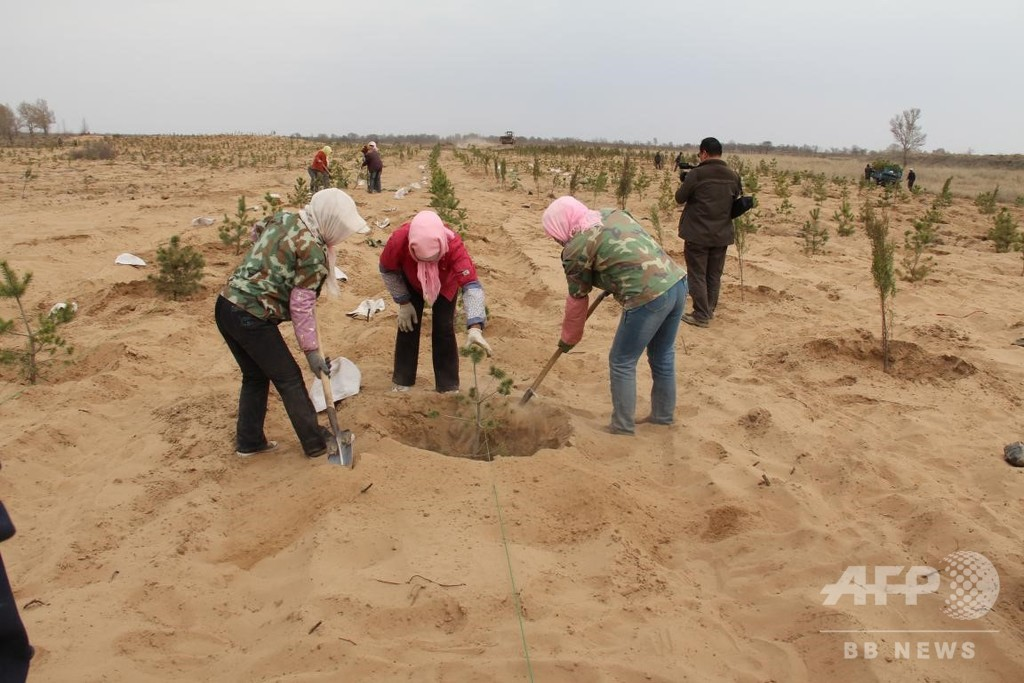 中国寧夏塩池、荒野の中に湿地出現