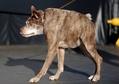 今年も開催、「世界一醜い犬コンテスト」