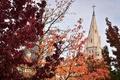一面の紅葉 フランスにも秋の訪れ