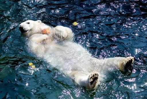 ひんやり~、熱波対策に氷のごちそう 独動物園