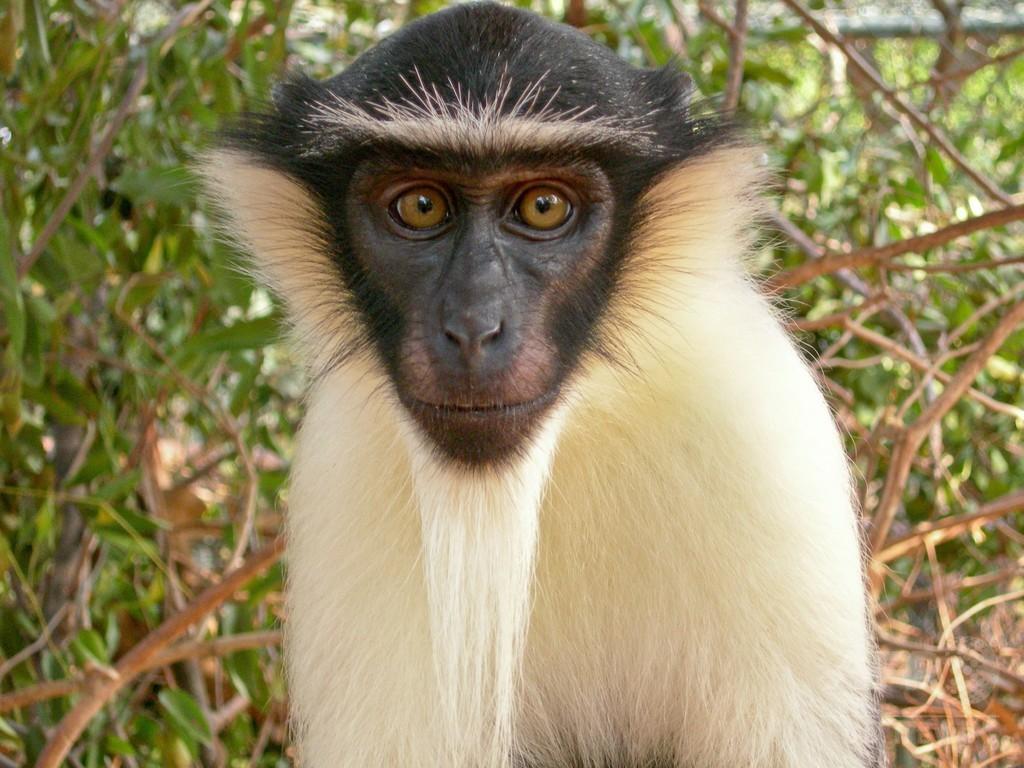 世界の霊長類の半数以上が絶滅の危機に、専門家