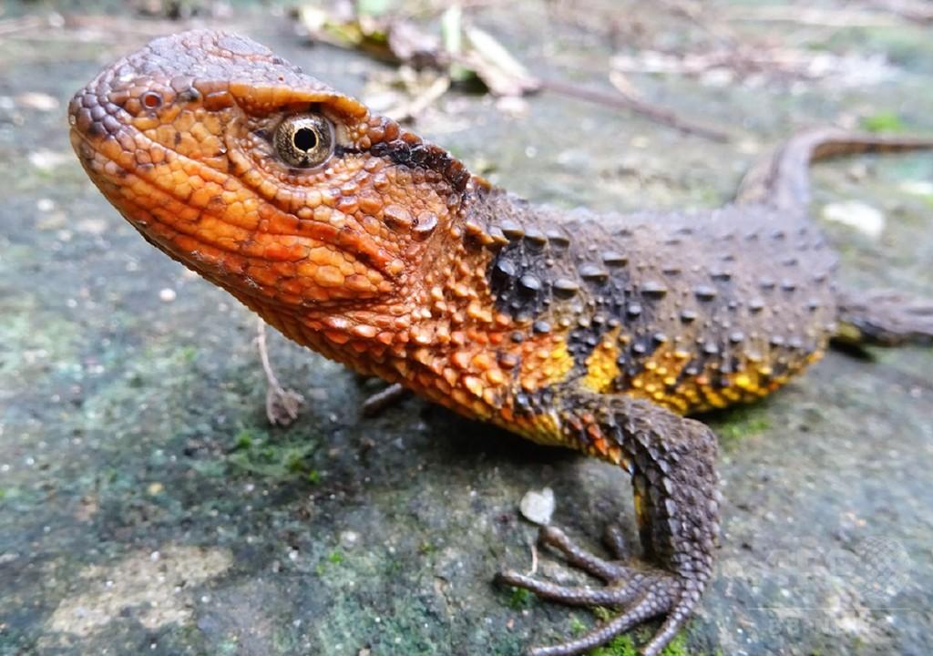 メコン川流域で2016年にも新種生物115種確認、WWF発表