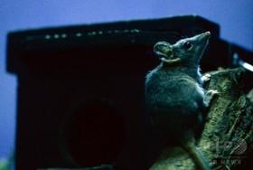 「醜い」動物の研究、人気のなさに警鐘 オーストラリア