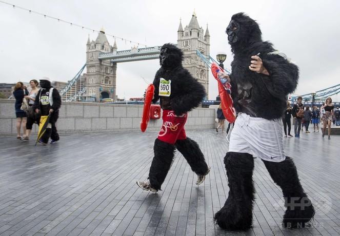 ロンドンを「ゴリラ」が走る、保護に支援呼び掛け