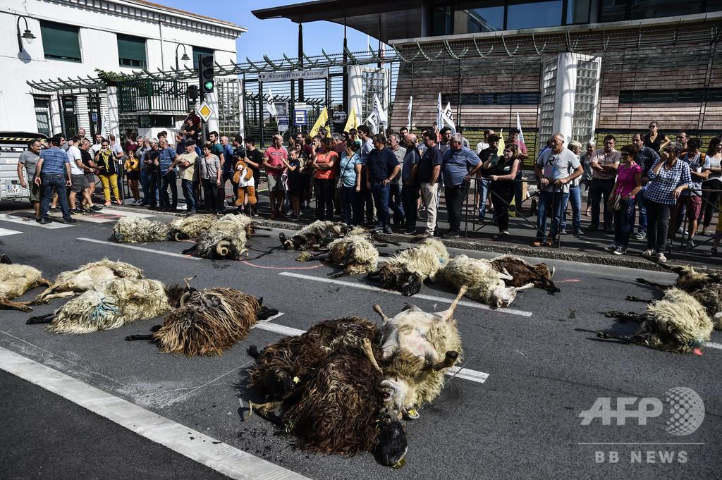 道路に複数の羊の死骸...フランス畜産業者がクマ被害訴え
