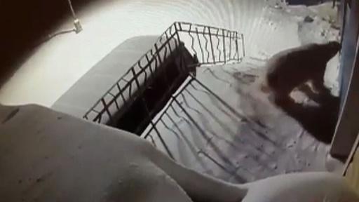 動画:ロシアからホッキョクグマがいなくなる 政府の北極圏開発追い打ち