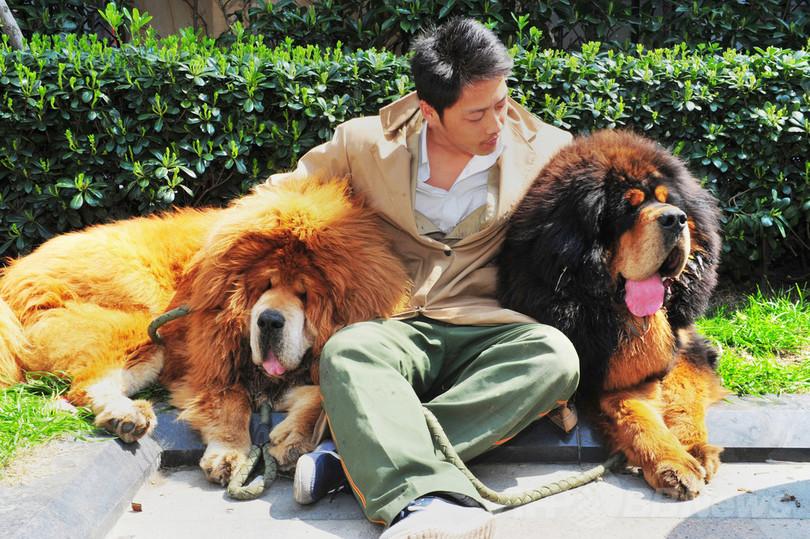 中国男性が「犬を2億円で購入」、史上最高額か
