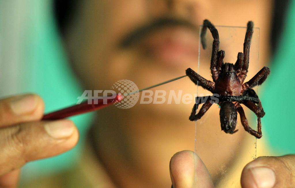 インド北東部の村で住民が毒グモの大群に襲われる