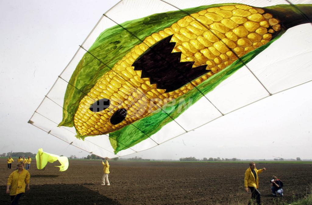 遺伝子組み換えトウモロコシを食べる害虫が増殖中、米国