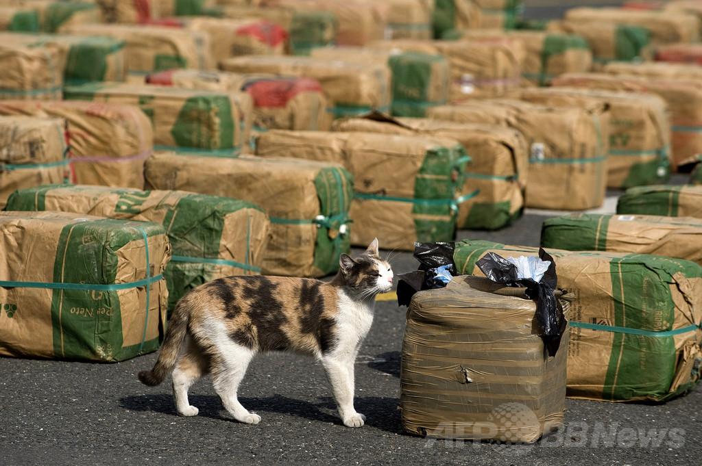 ニュージーランドのお手柄猫、大麻入り袋を飼い主へ