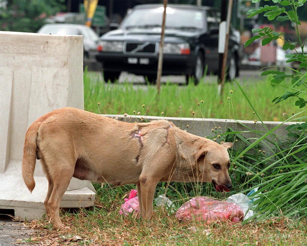マレーシア、狂犬病で子ども2人死亡 約20年ぶり 写真1枚 国際ニュース ...