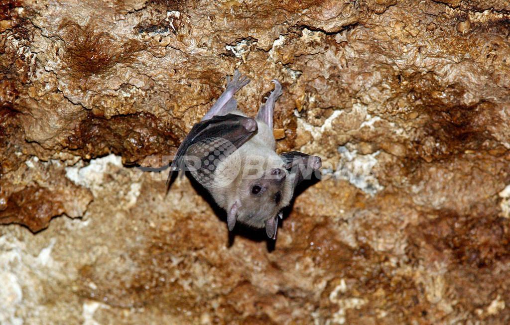 キプロス 保護対象のコウモリが大量に殺される