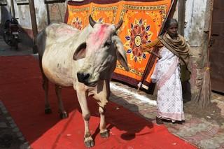 牛肉所持で禁錮刑に、インドの州で新法施行