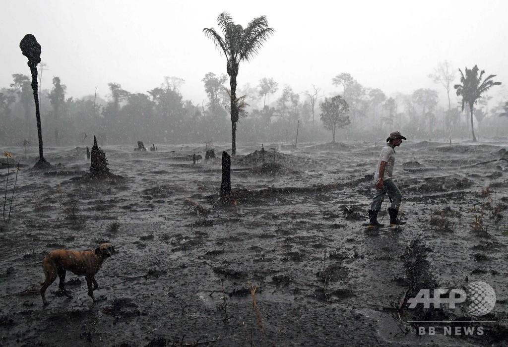 アマゾン森林破壊が加速、1~4月は前年同期比55%増