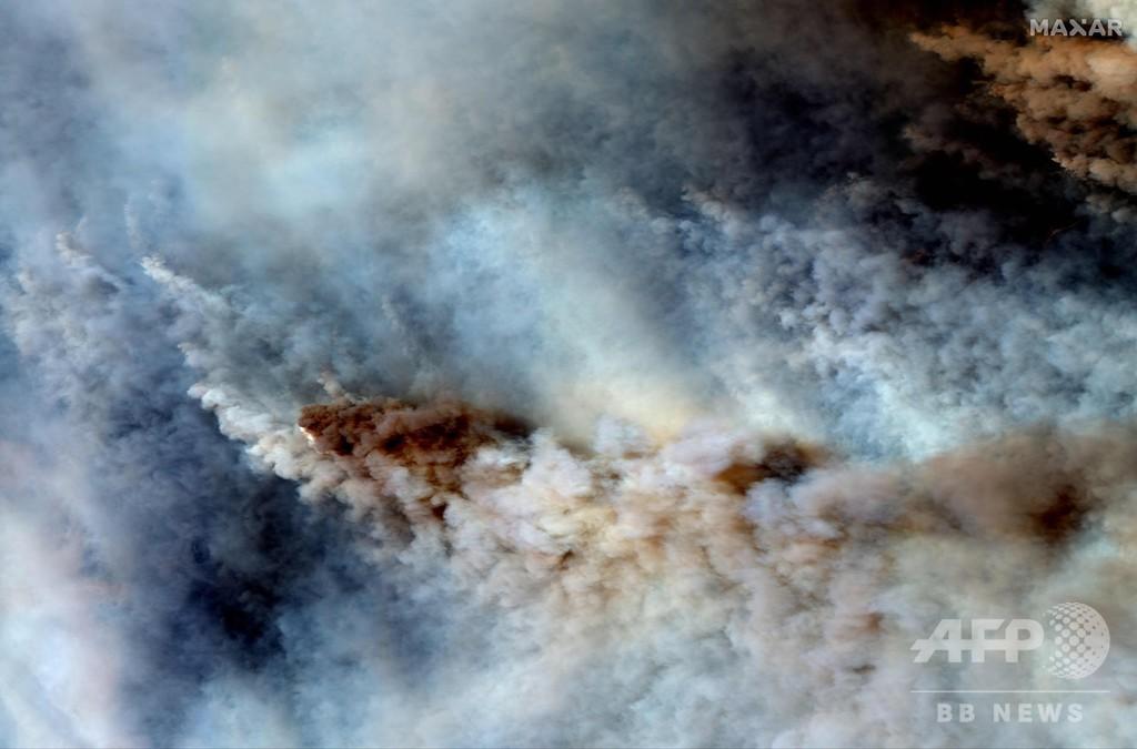 豪森林火災、コアラ保全のカギ握る個体群が半減 野生動物5億匹が焼死か - AFPBB News