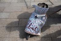 おめかし犬が次々登場、英国で「パグフェスト」