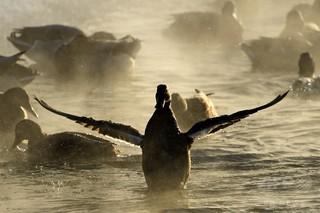 ロシアの動物園、鳥インフルで園内すべての鳥を安楽死処分