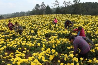 中国農村部の7億人が貧困脱出 改革開放40年