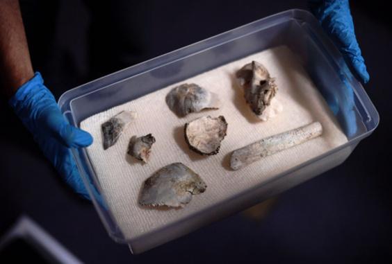 ブラジル博物館火災、焼け跡から1万2000年前の女性「ルチア」の人骨見つかる
