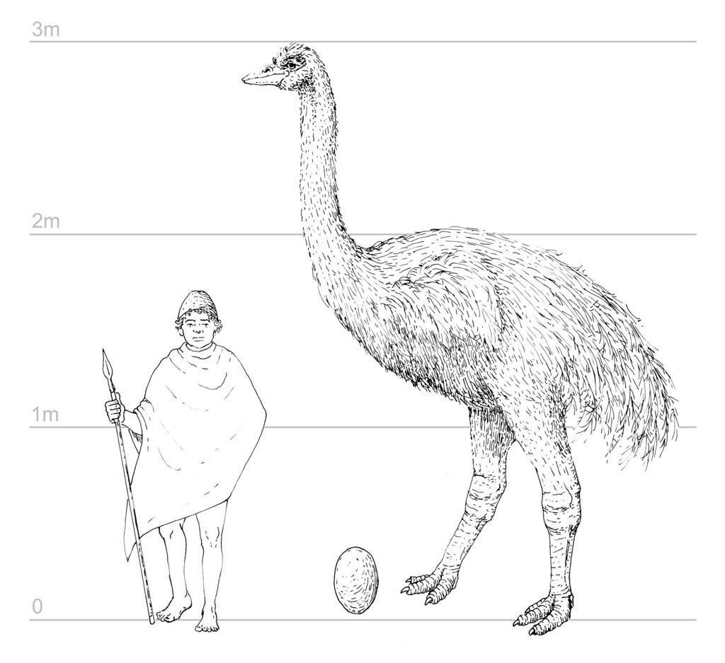 世界初、絶滅した鳥の卵殻化石からDNA抽出 豪研究