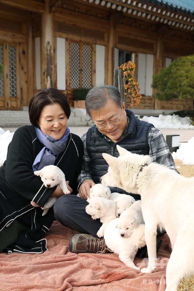 南北犬外交?金委員長が文大統領へ贈った犬、子犬6匹を出産